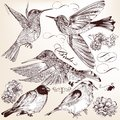 Collection of vector hand drawn detailed birds for design set Stock Images