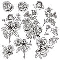 Collection of vector hand drawn roses for design in engraved sty Royalty Free Stock Photo