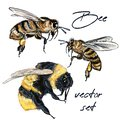 Collection of vector realistic bee, bumblebee in realistic watercolor hand drawn style. Realistic vintage style, insects macro