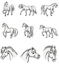 Collection of Walking Horses Stock Images