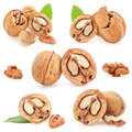 Collection of Walnut Stock Photography