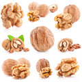 Collection of walnut and a cracked isolated on the white background Stock Photos