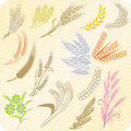 Collection of wheat ears and sheafs Royalty Free Stock Images