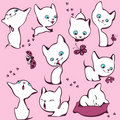 Collection of white kittens Royalty Free Stock Photos