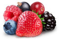 Collection of wild berries Stock Photography
