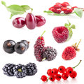 Collections of berry isolated on white background Stock Image
