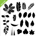 Collections of silhouette leaves vector