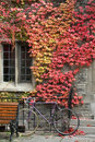 College building with fall ivy and old bike Stock Photo