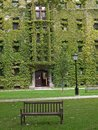 College building ivy covered gothic style Stock Photo