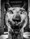 College of charleston cougar statue at td arena the outside the in sc Royalty Free Stock Photography