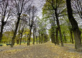 Colonnade of lime trees in the park Royalty Free Stock Photo