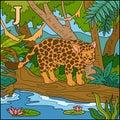 Color alphabet: letter J (jaguar)