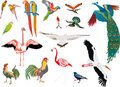 Color birds collection on white background
