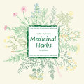 Color card of a medicinal herbs and flowers.