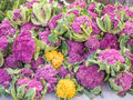 Color cauliflowers different varieties of cauliflower for sale at local farmers market Stock Photo
