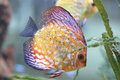 Color fish in aquarium Royalty Free Stock Image
