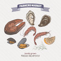 Color fish steak, shrimp, oyster and mussel hand drawn sketch