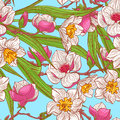 Color magnolias and narcissus beautiful natural background with hand drawn pink Stock Image