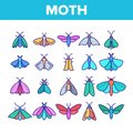 Color Moth, Insects Entomologist Collection Vector Linear Icons Set Royalty Free Stock Photo