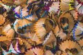 Color pencil shavings background, education and drawing lessons concept Royalty Free Stock Photo