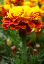 Color photography of autumn flower Royalty Free Stock Photo