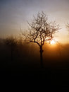 Color photography of beautiful winter sunset abstract and trees silhouettes in fog Stock Photography