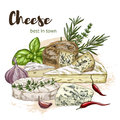 color realistic sketch illustration of cheese