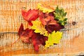 Color variation of leaves autumn Royalty Free Stock Image