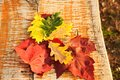 Color variation of leaves autumn Royalty Free Stock Photos