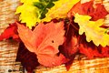 Color variation of leaves autumn Stock Images