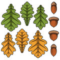 Color vector acorns and oak leaves. Isolated objects. EPS10 Royalty Free Stock Photo