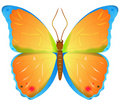 Color vector butterfly Stock Photo