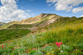 Colorado Alpine Meadow Stock Photo