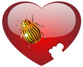 Colorado a bug on glass red heart Royalty Free Stock Image
