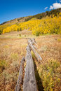Colorado desolate meadow with golden aspine trees in the autumn Stock Photography
