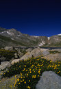 Colorado High Country in Summer Royalty Free Stock Photo