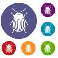 Colorado potato beetle icons set