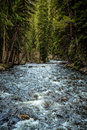 Colorado Stream in Evergreen Forest Royalty Free Stock Photo