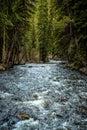 Colorado Stream In Evergreen F...