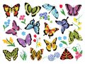 Colored butterflies. Hand drawn simple collection of butterflies and flowers isolated on white background. Vector