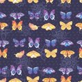 Colored butterflies texture Stock Photography