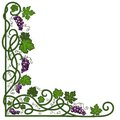 Colored decorative frame with a vine on a white background Royalty Free Stock Image