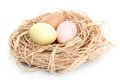 Colored easter eggs are in the nest Royalty Free Stock Image