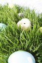 Colored Eggs And A Baby Chick Royalty Free Stock Photo