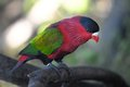 Colored elegant parrot bird on a blurred background Royalty Free Stock Photography