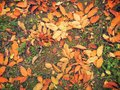 Colored fallen leafs beautiful image with Stock Photo