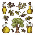 Colored illustrations of different olive products and ingredients. Vector hand drawn pictures isolated