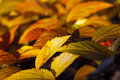 Colored leaves in autumn of plants Stock Photo