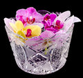 Colored orchid flowers mauve yellow pink purple in a transparent vase dark background Stock Photography
