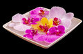 Colored orchid flowers mauve yellow pink purple in a white tray dark background Royalty Free Stock Photo